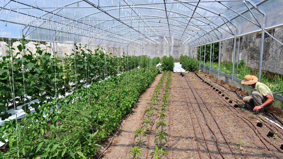 Un Petit Potager Productif les nouveaux jardins potagers de chambord | 500 ans chambord